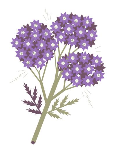 Vidam_Flower